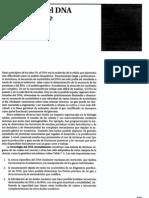 P2-C07 - Tecnología del DNA recombinante