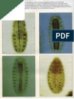 P2-C09 - El control de la expresión génica