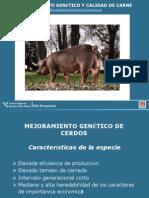 Mejoramiento Genetico y Calidad de Carne Cerdos