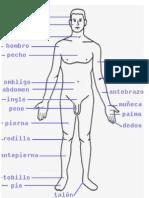 Cuerpo Humano en Ingles y Español