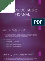 Labor de Parto Normal - Partos