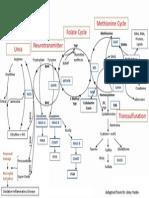Methylation Diagram