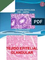 TEJIDO EPITELIAL GLANDULAR.pdf