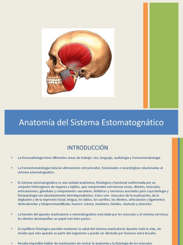 1Anatomia Del Sistema Estomatognatico.
