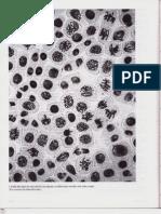 P3-C17 - El ciclo de división celular