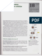 P3-C18 - Los mecanismos de la división celular