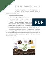 Fertilizacion de Los Cultivos