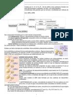Acidos nucleicos basicos