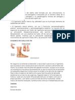 ANATOMÍA.docx
