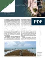 UsoAlgasmarinas.pdf
