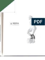 Anatomia Palpatoria PIERNA - S. Tixa