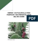 Hibrido de Cactus