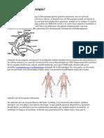 ¿Qué Es Fibromialgia?