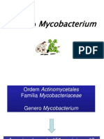 Aula Mycobacterium