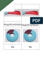 3 Part Cards_Ochiul