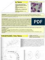 Haemoproteus columbae (1)