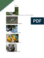 Tipos de Bosques y Sus Especies desarrollo