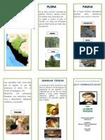Triptico Selva Flora y Fauna