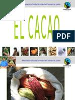 2011 Cacao Basico