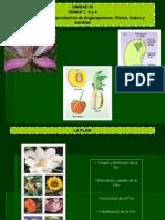 Temas 7, 8 y 9 Flor, Fruto y Semilla