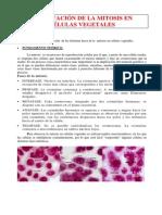 Observación de Células en Mitosis.