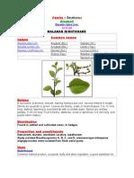 Family • Basellaceae Alugbati Basella Rubra Linn.