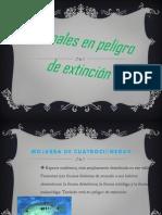 exposicion_biologia proyecto 1