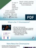 Y Chromosome Evolution BB