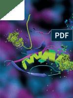 Top Down Proteomics