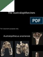 Australopithecines Tool Mfg