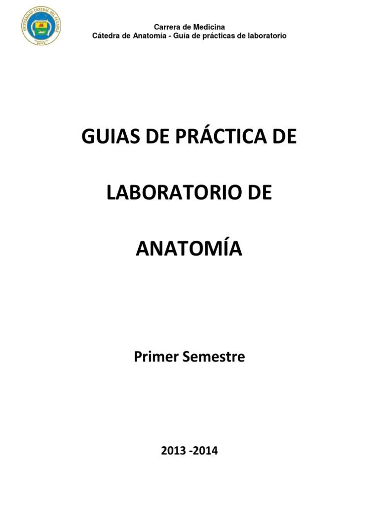 Guías de Práctica de Laboratorio de Anatomía primer semestre.pdf