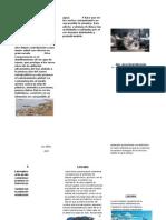 CONSECUENCIAS.docx2 (1).docx