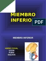 Miembro Inferior Osteo Articular