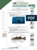 .__ Classsificação Dos Peixes - Só Biologia _