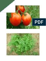 Plantas imagenes