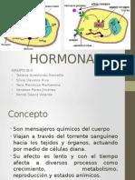 B. HORMONAS.pptx