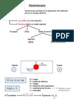Clase Electroforesis