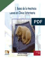 Anestesia Del Perro Ocw