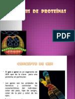 sintesis de proteinas.ppt