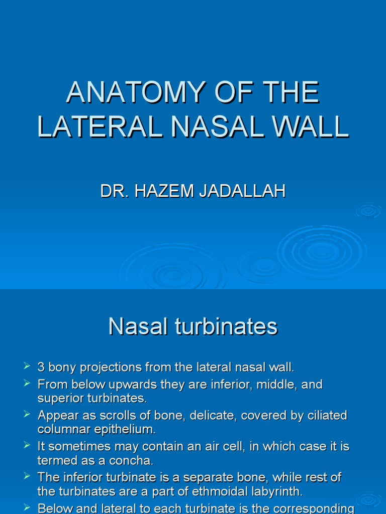 Anatomy Of The Lateral Nasal Wall Primate Anatomy Human Head And