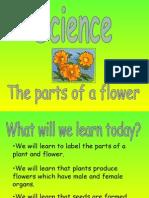 powerpoint on plants