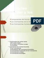 Biologia Células