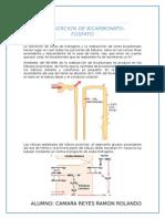 CAMARA REYES- REABSORCION DE BICARBONATO-FOSFATO.docx