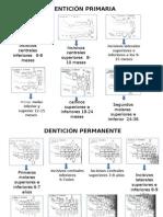 Cronologia de Erupcion EPIDEMIOLOGIA