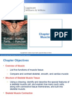 Chapter 7 Muscles Power Point