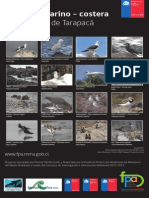 Afiche Aves I