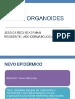 NEVOS ORGANOIDES