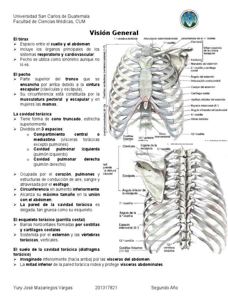 13. Introducción Tórax Esqueleto de La Pared Torácica