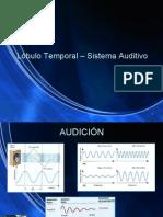 Lóbulo Temporal – Sistema Auditivo
