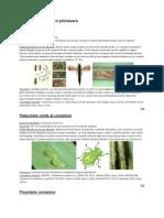 196953418-daunatorii-plantelor.pdf